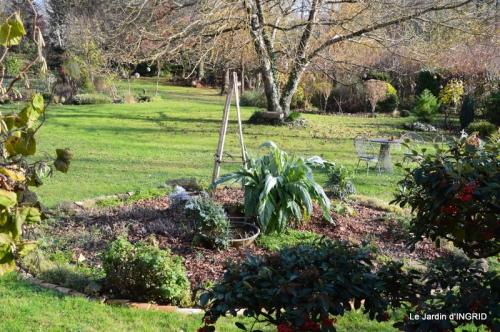 oiseaux,travaux,arbustes,les dernières fleurs 075.JPG