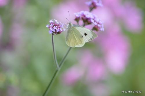 coeur des fleurs,papillons,libellules 126.JPG