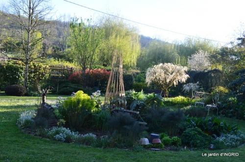 jardin confiné ,osier,magnolia jaune 160.JPG