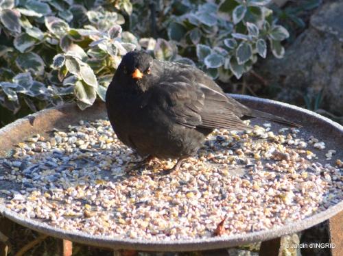 jardin givré,oiseaux 098.JPG