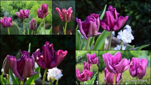 2014-04-15 Ciron,pivoine,escargot,jardin,ancolie,glycine.jpg