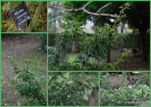 2015-09-15 moulin,les jardins d'Au-delà,Brantôme3.jpg