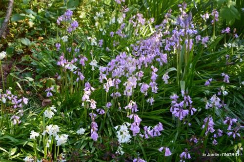 colline,orchidée,nature,jardin fleuri 028.JPG