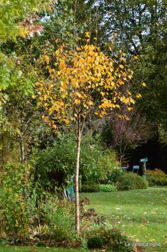 automne,arbres,inondation 002.JPG