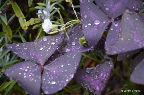 ombre,St Astier,St georges de Monclar,pluie,kois 093.JPG