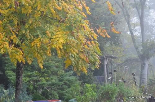 sauges,bouleau,coucher de soleil,érables,automne 108.JPG