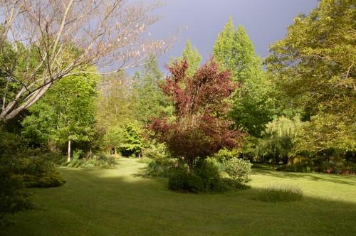 jardin,premières roses,colline,avant l'orage 111.JPG
