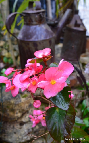 les tons roses,choux frisés,automne 069.JPG
