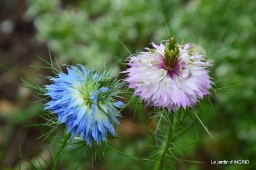 Roses du jardin,soirée Monpazier,puces Eymet 231.JPG