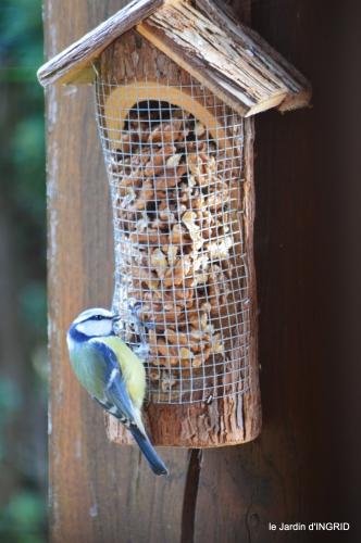 les lettres,les oiseaux,givre 094.JPG