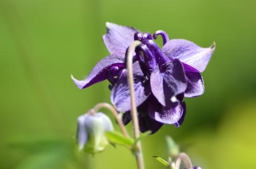 zoom sur fleur printemps 105.JPG