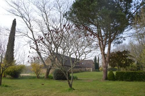 Beaumont,tulipes,primevères et autres,chez Bernadette 144.JPG