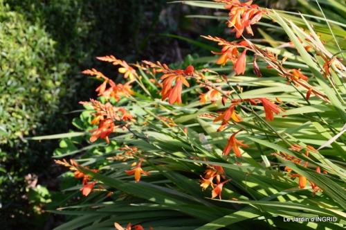 dahlias,jardin,puces st Avit Seigneur,Paniers Issigeac,Romane 062.JPG