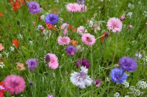 coeur des fleurs,papillons,libellules 045.JPG