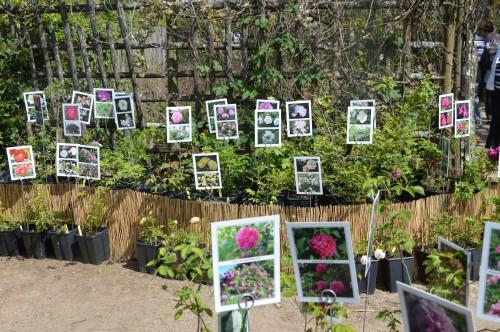 ancolies,jardins de la Brande,les filles et Caro 070.JPG