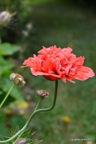 jardin juin,cabane,bouquet 109.JPG