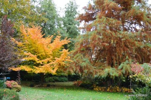 les arbres en automne,cabane 029.JPG