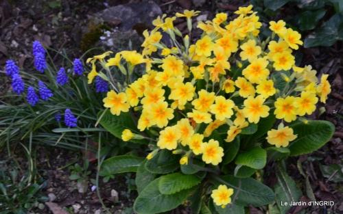 jardin (3 semaine de mars) 055.JPG