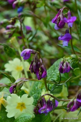 jardin ,cane sauvage,paquerettes,tulipes 082.JPG