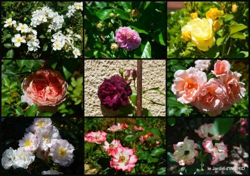 2017-06-10 le jardin de Frescati,roses4.JPG