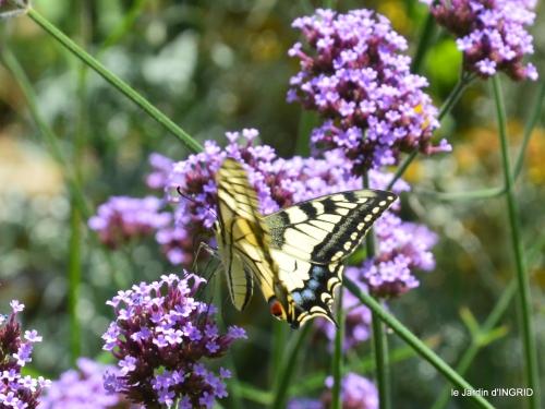 jardin,papillons,Cadouin,légumes,Sophie, 162.JPG