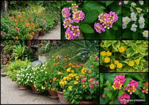 2020-06-28 juin jardin,bouquet,sophie.JPG