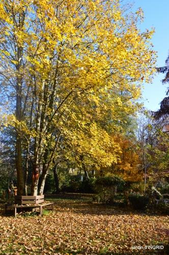 fin de l'automne,Lalinde,bouquet de l'avent 017.JPG