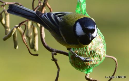 les oiseaux ,2 partie 038.JPG