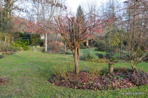 taille,arbustes,poinsettia,décos 089.JPG