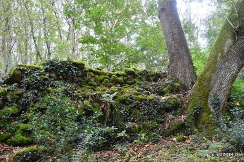 la Sedelle,étang de Riault,cyclamens 109.jpg