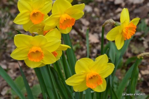 jardin (3 semaine de mars) 030.JPG