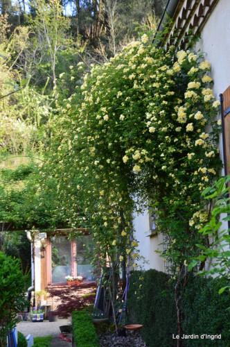 mésanges,escargots,ros. de banks,abeilles,Monpazier,Banes,Forêt 092.JPG