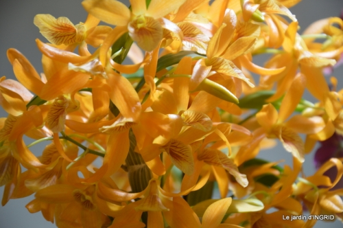 canal,jardin,Mombazillac,bonzais,orchidées 182.JPG