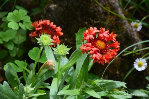jardin pluie,Inès,Bébés cygnes,bouquet,canal 047.JPG