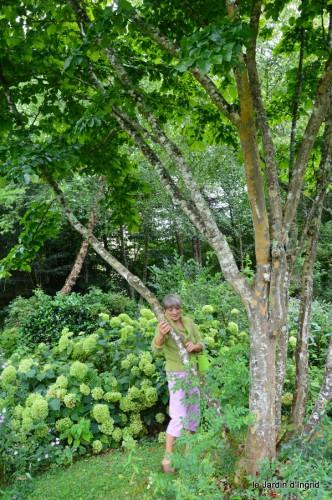 asters,bouquets,jardin de Lilianne 039.JPG