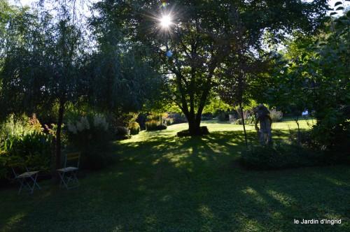 jardin,asters,fleurs blanches,chatte,rosiers roses 064.JPG