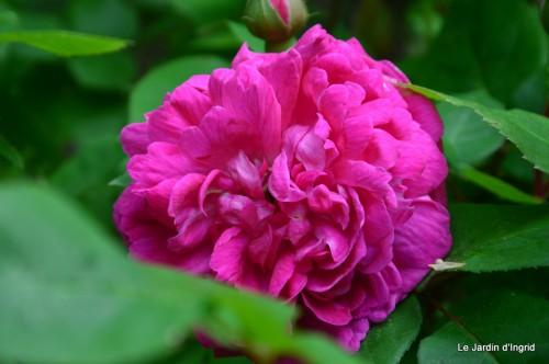 jardin,roses,cabane 022.JPG