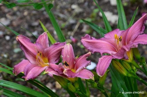 potager,chenille,pour le 18 juin,tour du jardin 040.JPG