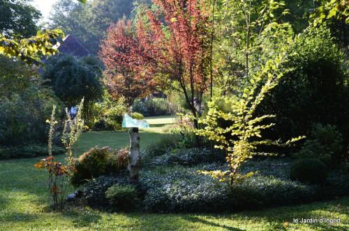 jardin,asters,fleurs blanches,chatte,rosiers roses 071.JPG