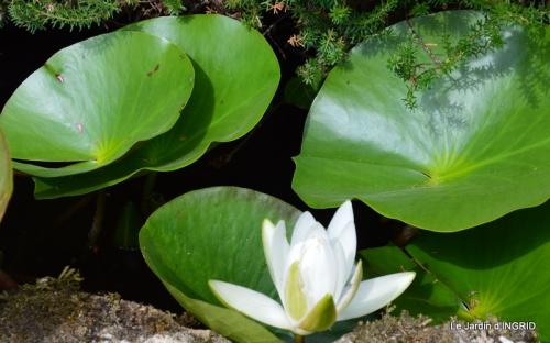 les jardins d'eau de Carsac 076.JPG
