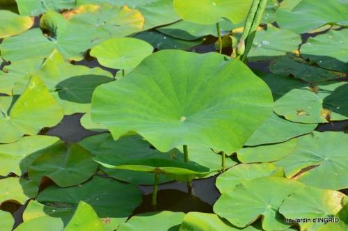 les jardins d'eau de Carsac 137.JPG