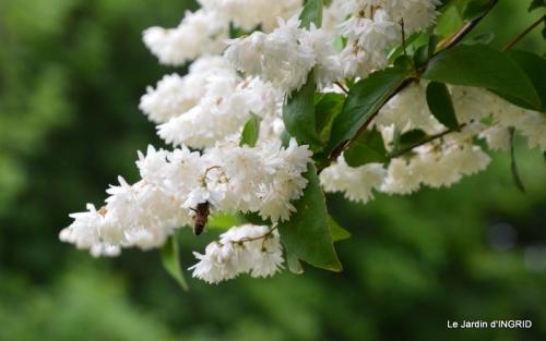 Roses du jardin,soirée Monpazier,puces Eymet 194.JPG