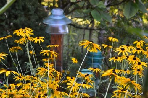 mon coin,Monique,les oies,mon jardin 046.JPG