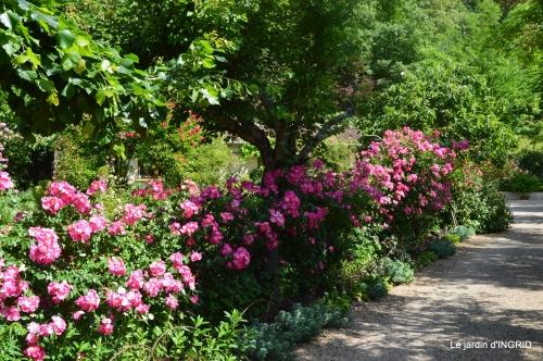 les roses,les 4 filles,jardin,Julie,coquelicots,cygnes 136.JPG