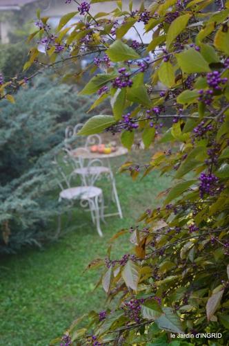 brouillard le matin d'automne 016.JPG