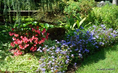 dahlias,massifs refaits,Lalinde,jardin 043.JPG