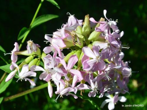 jardin coulobre,cygne, 056.JPG