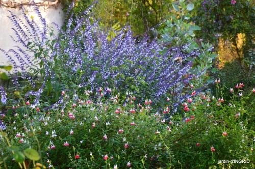 jardin,troc graines,coucher de soleil,la Brenne 028.JPG