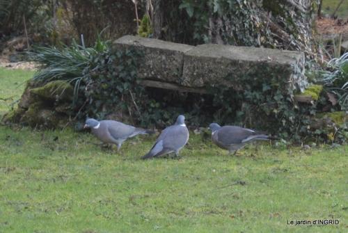heron,oiseaux,givre, 042.JPG