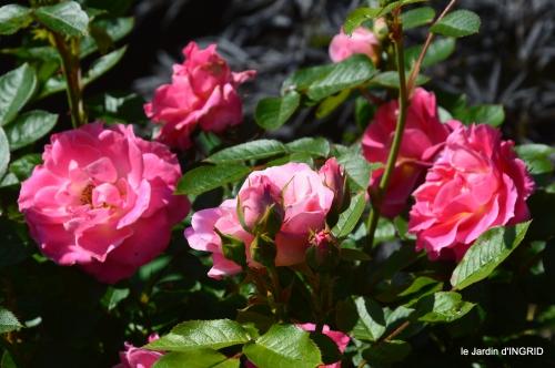 cygnes,Sophie,jardin en mai 021.JPG